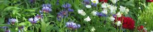 Blütenstreifen, Blog