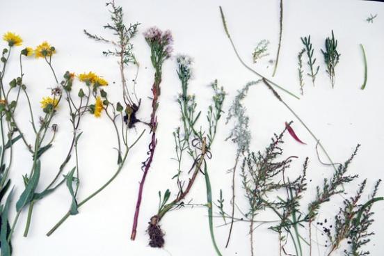 pflanzen-deich-fotogr-001-kopie